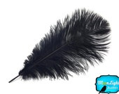 """Large Ostrich Feathers, 10 Pieces - 14-17""""  BLACK Ostrich Dyed Drabs Feathers : 1383"""