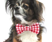 Pet Dog Bowtie-Red and White Gingham Checkered Small