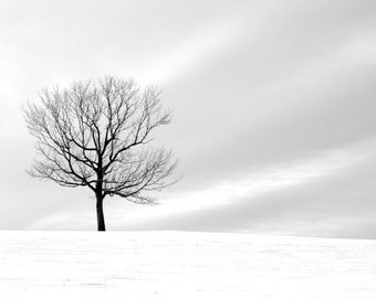 Black and White Tree, Winter Art, Minimalist Decor, Nature, Landscape, Fine Art Photography, 11X14 Mat, Nature, Ready to Frame, Wall Hanging