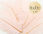 BLUSH PINK - BULK - 4-8 inches - Ostrich Feathers Drabs