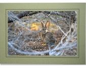 Rabbit Cards - Desert Cottontail Rabbit Card - Desert Wildlife Photography - Bunny Cards - Easter Bunny Cards - Custom Rabbit Cards