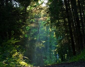 Deep woods photograph- Heavenly Path fine art print - New England photography, sun beam, mysterious path, lush green woods, nature wall art