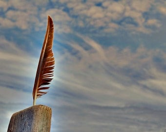 Surreal Nature Found Object Photography - Gull Feather Against Dramatic Summer Sky -  Gallery Quality Wall Art in Various Sizes and Finishes