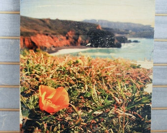 """Best View in the House: Mori Pt. Poppy - 8""""x10"""" Distressed Photo Transfer on Wood"""