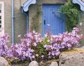 Ireland Photography Kenmare travel blue door purple flowers country farmhouse home decor gray lavender