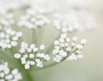 White Flower Photograph soft close up macro summer garden cottage country light creamy vanilla home decor ethereal