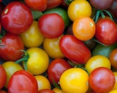 Tomato, Organic Heirloom Cherry Tomato Mix Seeds | Delicious Assortment of Cherry Tomatoes