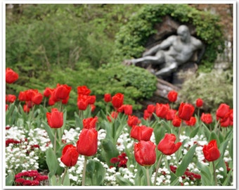 """Paris Photography - """"Red Tulips, Jardin du Luxembourg"""" - 8x10 Fine Art Photo by Lesley Sico"""