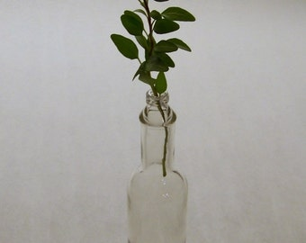 Tabasco Bottle with Lid, Small Clear Bottle for Crafts