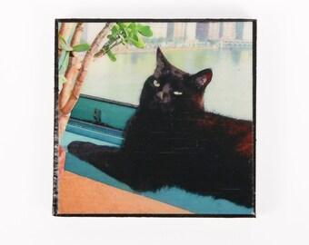 Cat Magnets, Black Cat Art, Refrigerator Magnets, Fridge Magnets, Cat Lover Gift, Deborah Julian