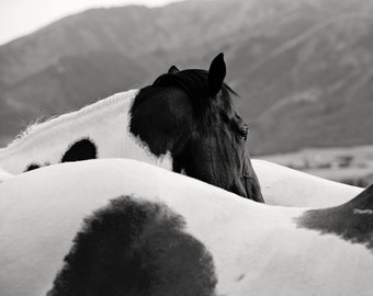 Paint Horse Photograph in black and white, Western Horse Photography