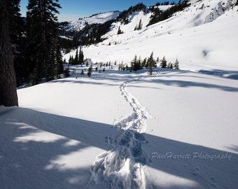 "Winter Photography - Fine Art Photography - Snow  - Mt Rainier - 11 X 14"" Print - Paul Harrett Photography"