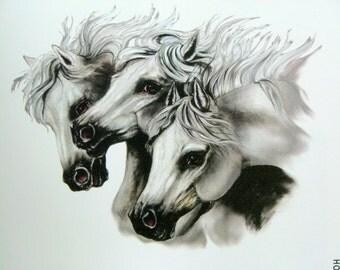 Three Arabian Horses Heads on Womans Quality T Shirt 6622