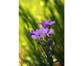 Digital photo download Spring photography Surreal photography flower nature photograph Meadows Bright green wall art