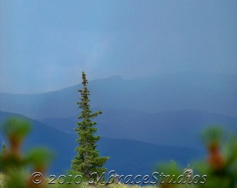 Colorado Evergreen Tree in blue mountains matted 5x7photo  in 8x10 mat. christmas Tree Photograph