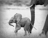 BABY ELEPHANT PHOTO, Black and White Print, Baby Animal Photography, Wildlife Photography, African Safari, Nursery Art, Safari Baby Nursery