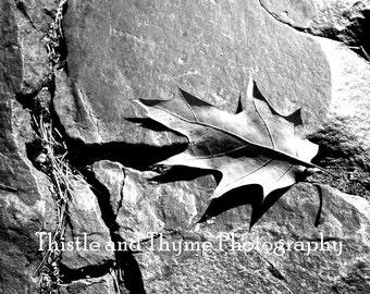 Black and White Leaf - 5x7 photographic art print