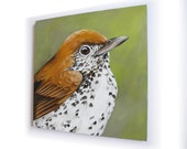 Speckled Wood Thrush Painting, large bird portrait, 18x18 square canvas wall decor
