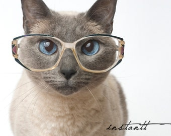 Photographic Print - Cat in Glasses - 8x10