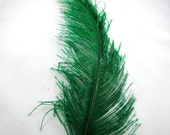 OSTRICH Plume green  ostd-01 craft feathers fly tying feathers