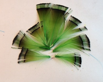 Golden Pheasant Tippet Feathers  green 10pk craft supply's