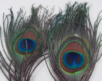 2 Peacock plumes eyes dyed purple feathers pced-19 peacock eyes craft feathers