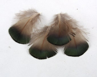 12 Golden Pheasant Feathers natural electric Jade