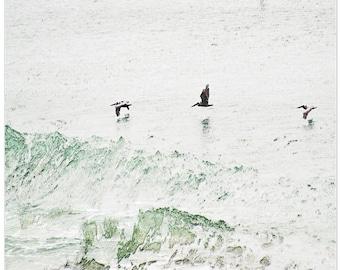 Bird photography, brown pelicans, flight, ocean, north carolina, fine art