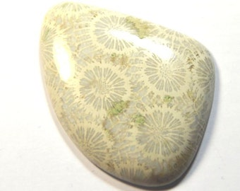 HUGE RARE 54mm FOSSIL  Coral cabochon 99ct