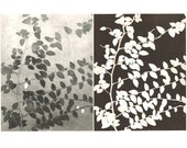 pair of monoprints, ivy, botanical print, black & white
