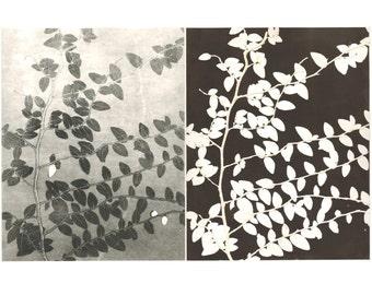 pair of monoprints, ivy, botanical print, black & white