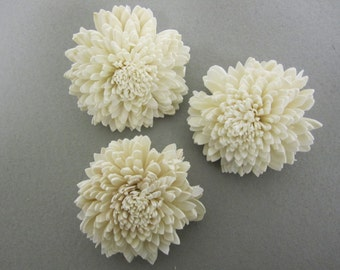 Sola Zinnia Flowers  -- Set of 6 -- Natural Color