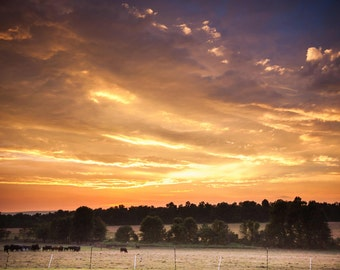 Gettysburg Pennsylvania Rural Sunset Landscape Photograph with Cows Free Shipping to the USA