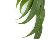 On Sale 25% Off Eucalyptus & Thyme Roll On Perfume Oil