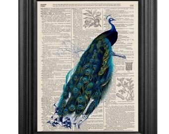 Dictionary Art Print - Peacock - 8x10