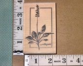 RESERVED FOR MISS M* Stampington - M4220 Medium Sketched Wintergreen