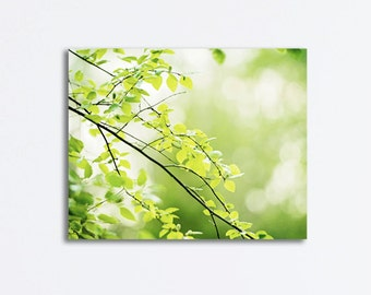 "Nature Canvas Art - green canvas wrap tree branches gallery wrapped canvas botanical wall art canvas photography print, ""A Prayer in Spring"""