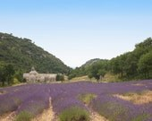 Lavender field photo, Lavender canvas or print, monastery photo, Provence print, Provence canvas