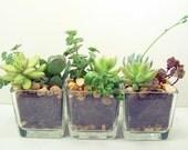 Terrarium Succulent planter DIY kit Desk Accessories  or Wedding Centerpieces