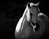 STILO -Andalusian Horse, Black & White photography, Edition Equine Art Print, Wall Decor,HORSE PHOTOGRAPHY