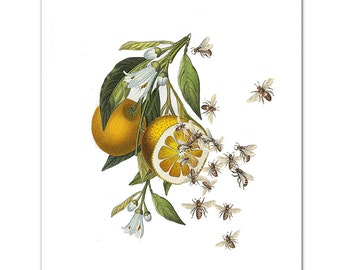 Art Print, Illustration,ORANGES AND BEES - Busy making Honey - Wall decor,Fine Art Prints, Art Poster Save the Bees print