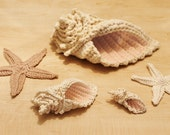 Crochet Conch Shell and Starfish Sea Shell Pattern INSTANT DOWNLOAD PDF from Thomasina Cummings Designs