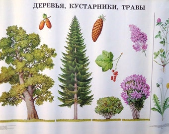 Trees Botanical Print, Vintage School Poster, Vintage Print, Picture of Trees and Bushes