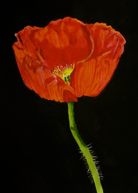 Red California Poppy Watercolor Print by PaintedbyCarol on ...