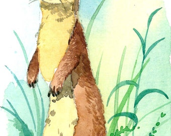ACEO Limited Edition 7/25- Long tailed weasel, Art print of an ORIGINAL ACEO watercolor painting, Gift for animal lovers, Housewarming gift
