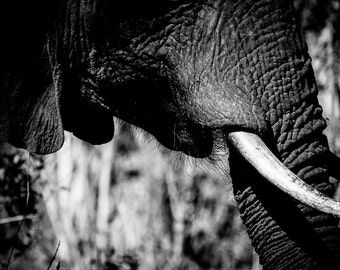 Safari Animal Art, Sepia Elephant Monochrome Home Decor- Africa Fine Art Animal Photography Print