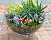 Unique Footed Air Plant and Mushroom Terrarium - A Lovely Birthday or Valentines Day Gift