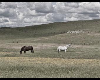 "Fine Art Print:  Horses, Hills, Clouds, Wildflowers ""Peaceful Undulations"" Landcape 13 x 5"