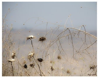 Nature photography print of a summer field - gift idea - affordable print for home - 8x10