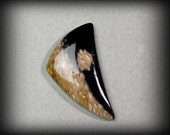 Petrified Palm Wood Cabochon